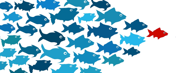 Fish-leadership-600x250
